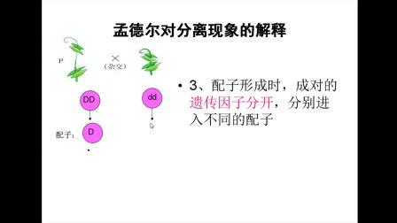 《孟德尔对分离现象的解释》高一生物-榆林高新区完全中学-李杰-陕西省首届微课大赛