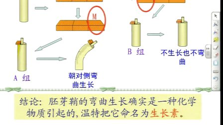 陕西省示范优质课《植物生长素的发现2-2》人教版高一生物,西安市铁一中学:张兮