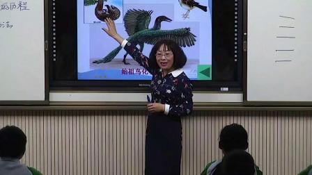 初中生物人教版八下《7.3 生物进化的历程》甘肃陈金梅
