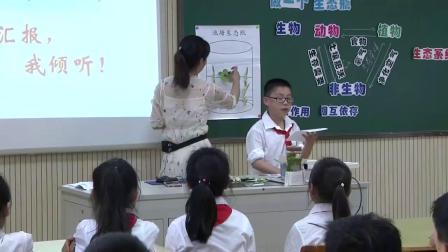 教科版小学科学五上《做一个生态瓶》课堂教学视频实录-沈婷婷
