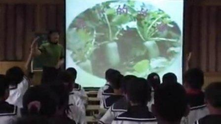 《萝卜的故事》优质课2-2(北师大版品德与社会四下,大连市金州区龙王小学:王佳萍)