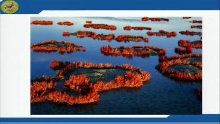 初中地理人教版八下《9.2   高原湿地──三江源地区》安徽  孙莉