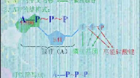 """《细胞的能量""""通货""""——ATP》高一生物-中牟县第一高级中学:王利强"""